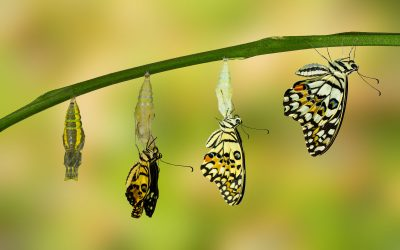 Breaking Out of the Cocoon: A Fresh Start for a New Year